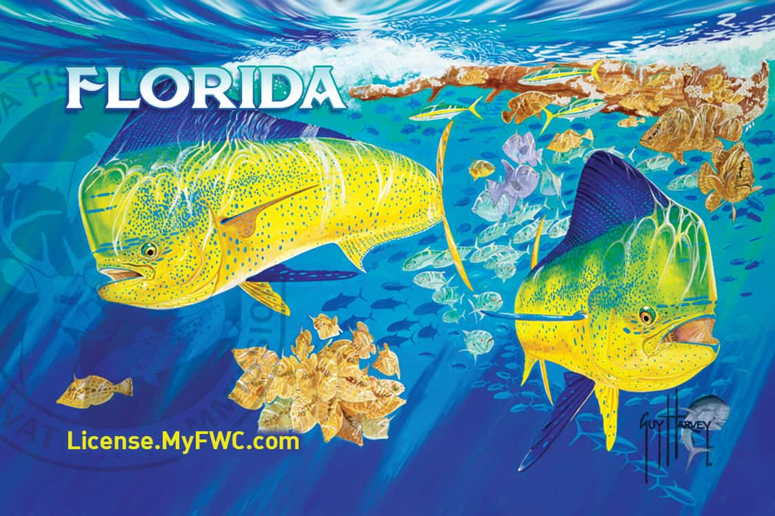 Use guy harvey outpost 39 s new fishing app for a chance to for Fl fishing license