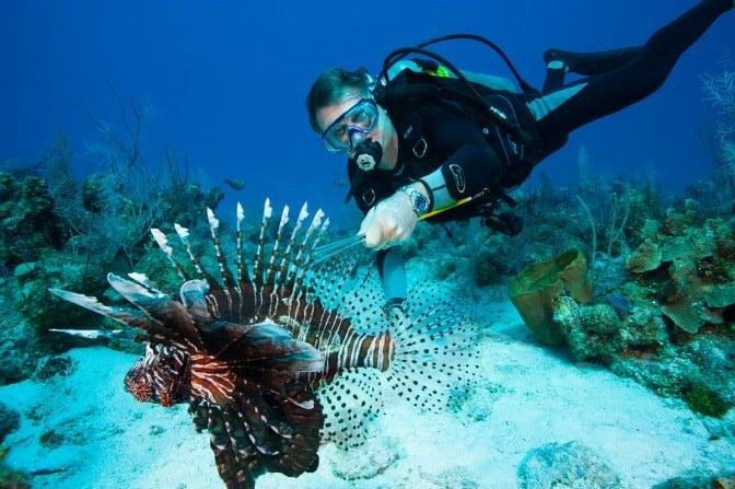 Schellenger Lionfish