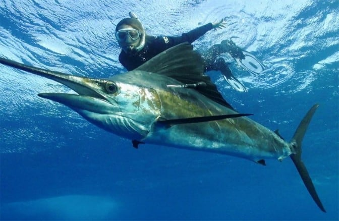 World's Foremost Billfish Scientists gather at igfa hq