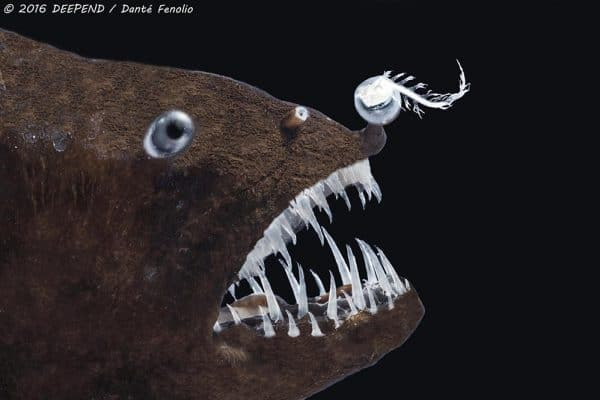 Catching Weird Mini Monsters from the Deep Sea
