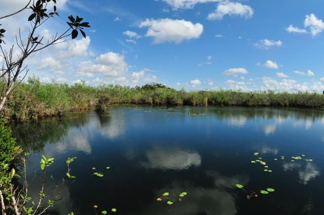 glades-scene