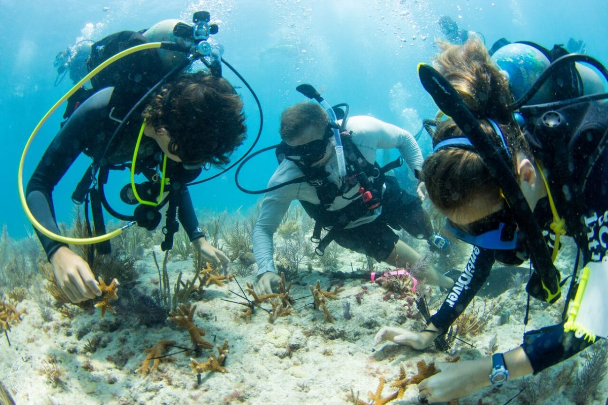 Vets and Kids Plant 500 corals in one day in the keys