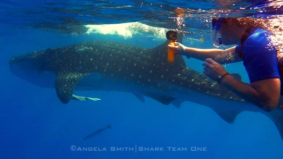 Whale sharks turtles temples highlight isla mujeres expedition