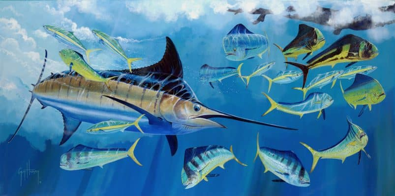 Great Marlin Race May Come to Galapagos